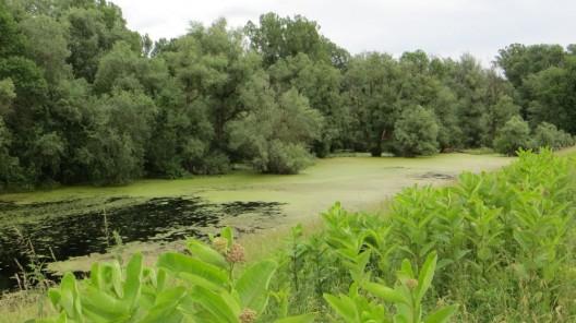 im Kopacki Rit Naturpark