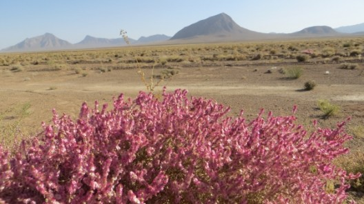 Landschaft auf dem Iraner Hochplateau