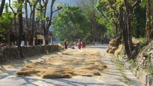 In den kleinen Ortschaften sehen wir des öfteren wie die Weizenhalme auf der Strasse ausgebreitet werden, wir vermuten um die Weizenkörner zu lösen