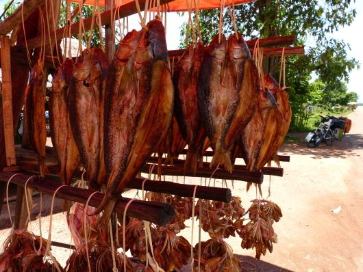 Geräucherter oder luftgetrockneter Fisch aus dem Mekong - sicherheitshalber haben wir ihn nicht probiert...