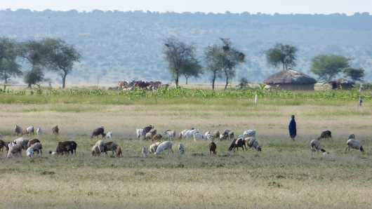 im Massailand im Norden Tansanias