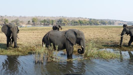 Elefant bei der Fluss-Safari