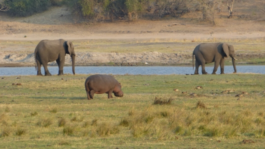 Hippo und Elefanten