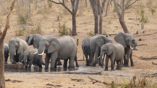 Elefantenherde an einem Wasserloch