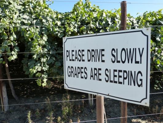 Langsam Fahren, die Trauben schlafen gerade!