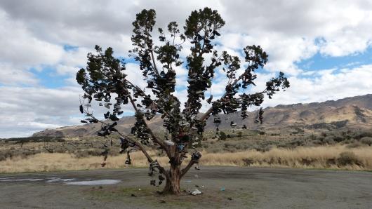 Schuh-Baum